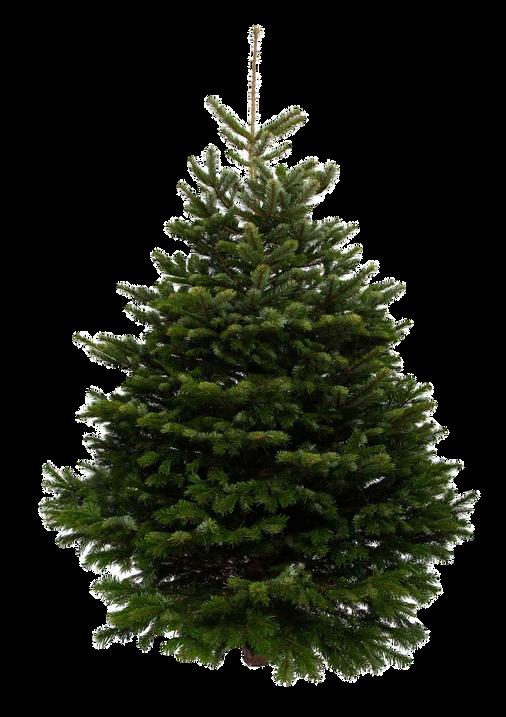 9ft-nordmann-fir-christmas-tree_edited.png