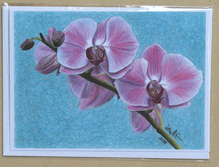 Evolve Like the Orchid and Become What You Need