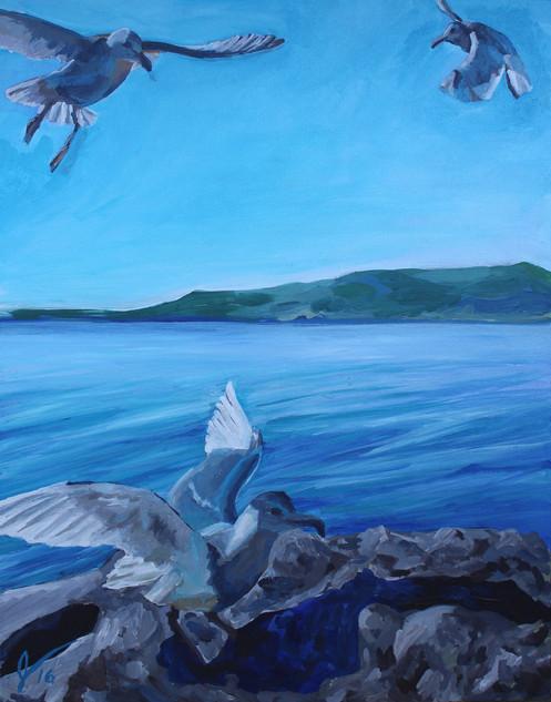 Gull Territory