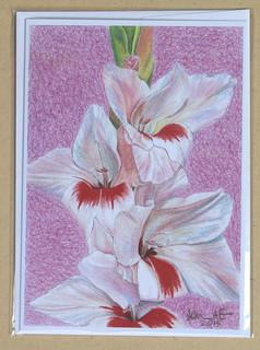Glad as Gladiolus