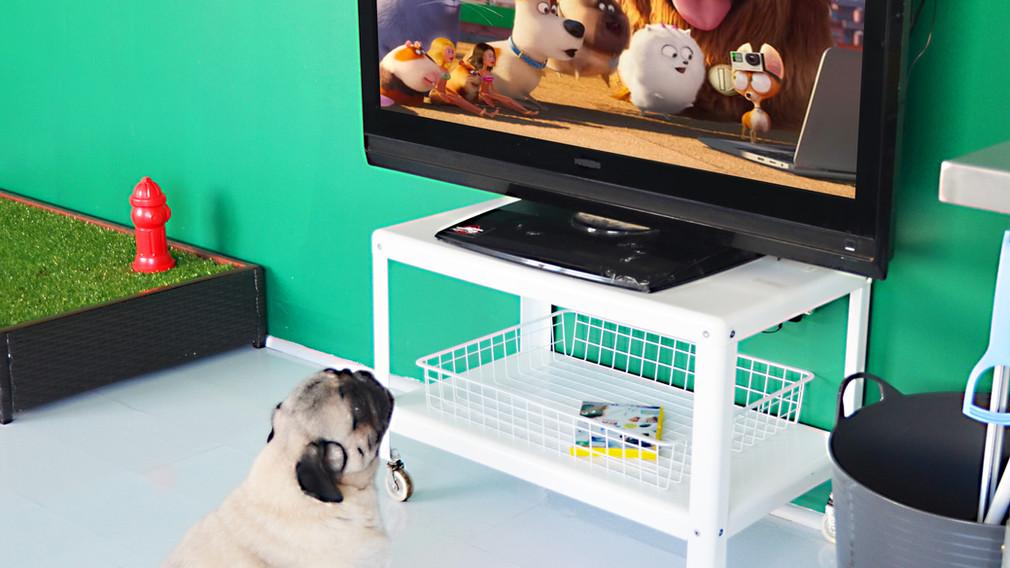 Rodger watching TV