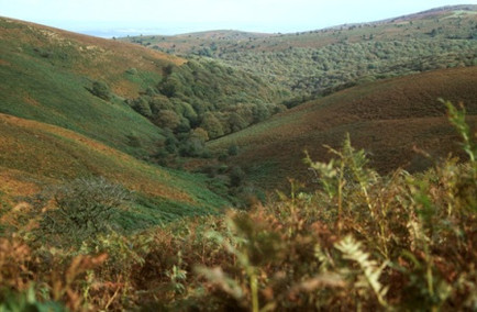 View from Woodlands Hill up Holford Combe
