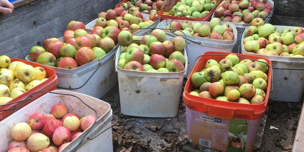 Apple Pressing Day - Quantock Eco