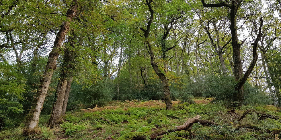 Quantocks - Intro to temperate rainforest for walk group leaders (CANCELLED DUE TO CORONAVIRUS)
