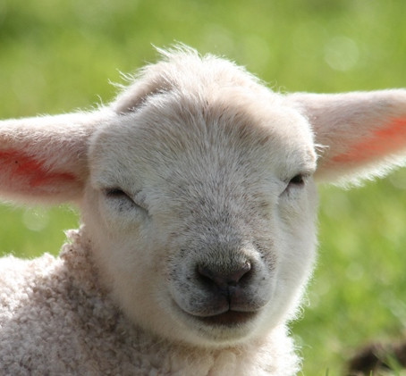 Nothing is more evocative of spring than seeing new lambs by their mothers out in the Quantock count