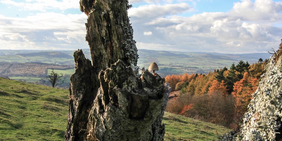 The Quantock Experience Guided Walk - Thursday 16th January 2020