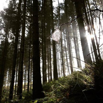 Hawkridge Woods