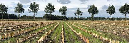arable field_FWAG SW.jpg