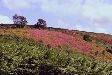 Heathland By Angela Crockford