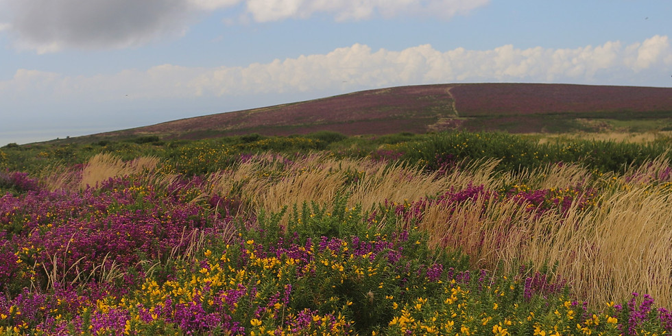 Quantock Experience Guided Walk