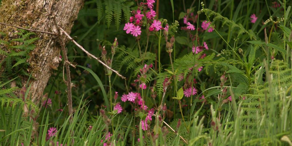 Hay Meadow Flower Walk