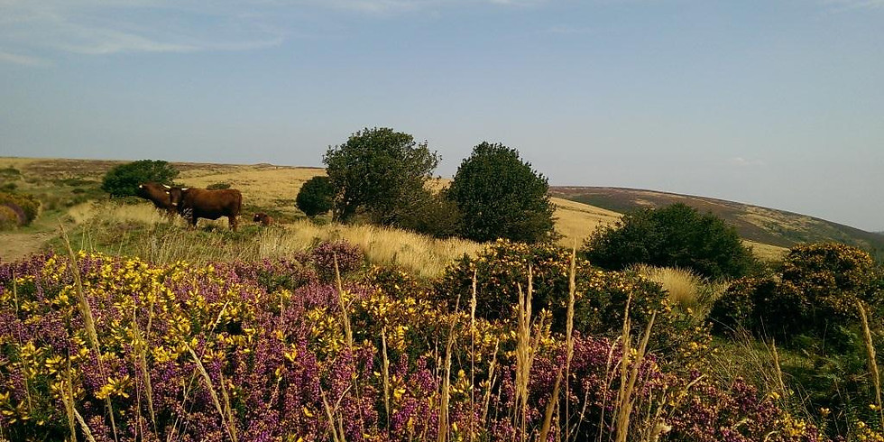 The Quantock Experience Guided Walk - Friday 15th November 2019