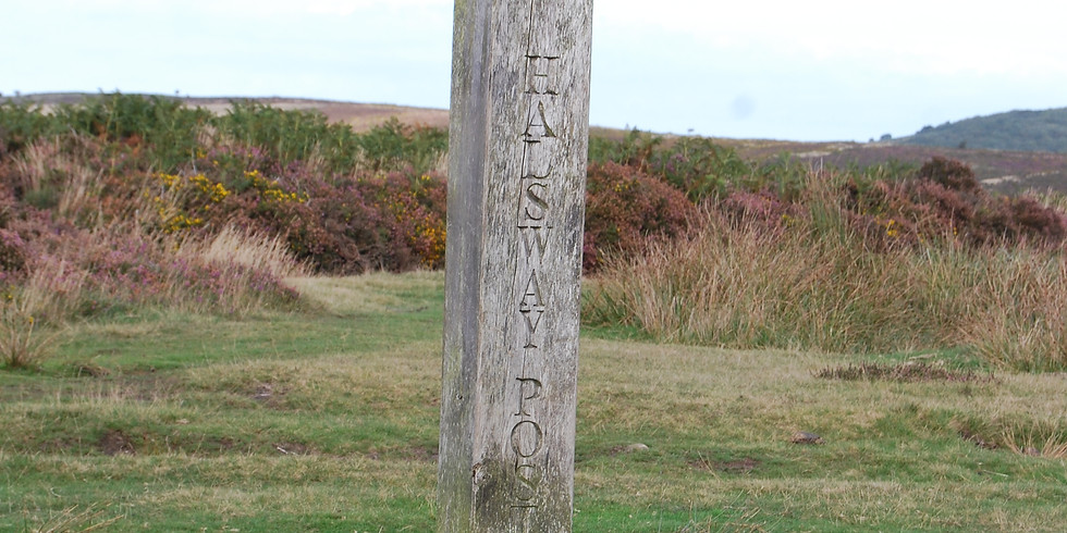 Quantock Experience Guided Walk (8 miles)