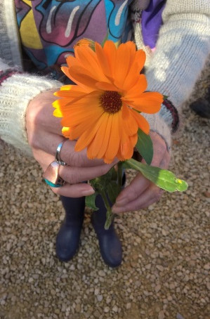 Inspiration from Danielle - How volunteering with the Somerset AONBs' nature and wellbeing proje