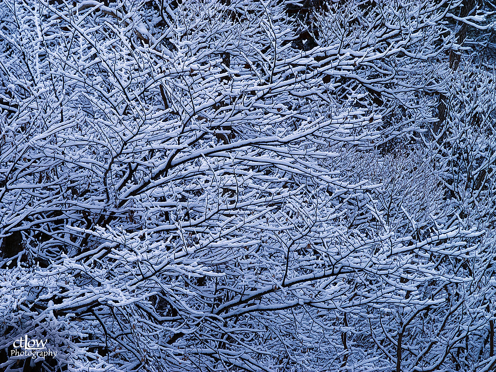 snowy branches, lots of bright