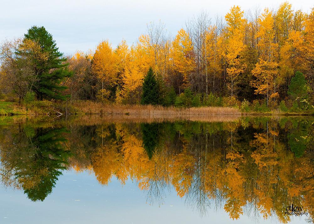 Lyn Pond, autumnal colour, reflection, Cataraqui Conversation Authority