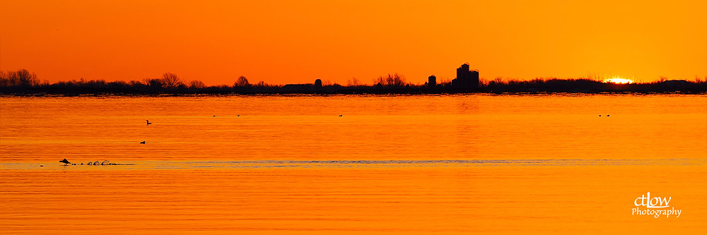 First light over the St. Lawrence River ... and bird.