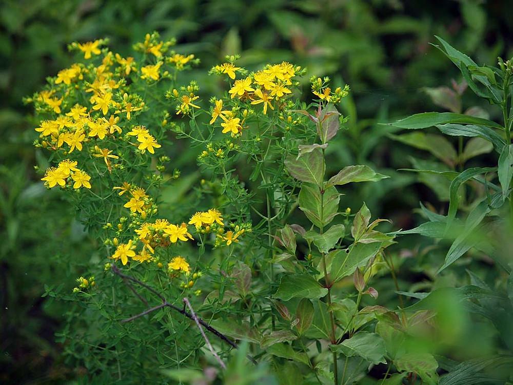 yellow flowers in flat light