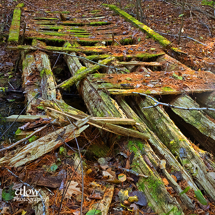 Photo Walk - crumbling wooden bridge ... for marketing