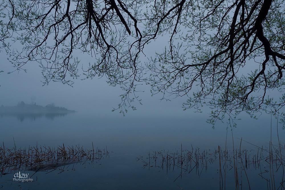 1000 Islands island dawn fog tree branches frame