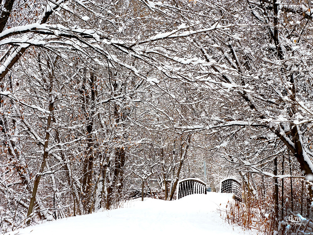Brock Trail, fluffy snow on branches, bridge