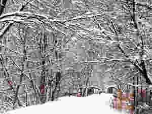Brock Trail, fluffy snow on branches, bridge