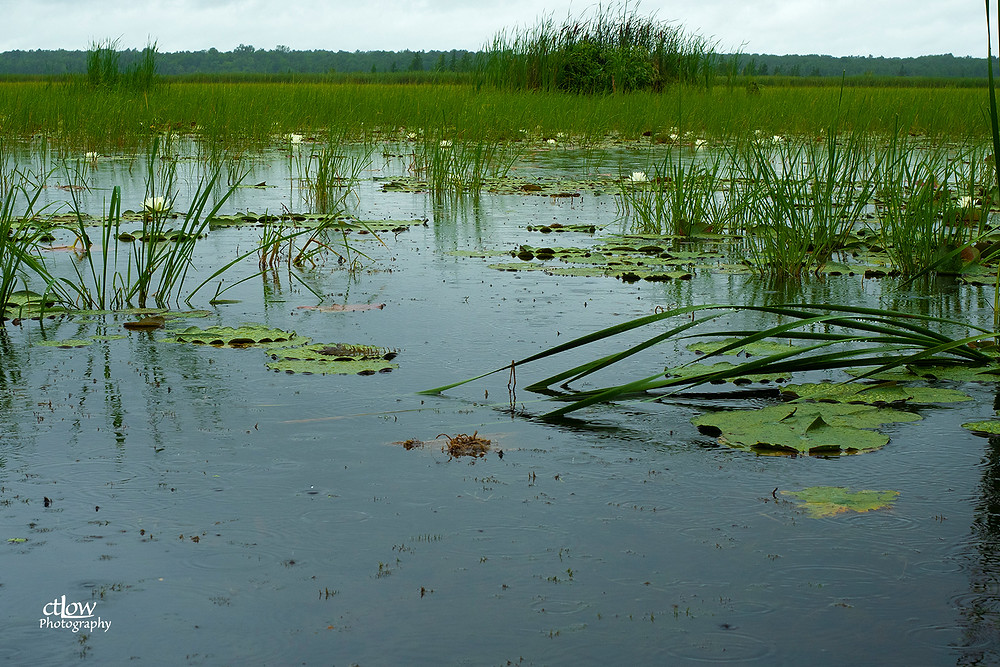 Back Pond, August