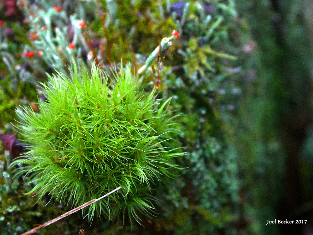 "mossy ""tendrilly"" glowing green saprophytic plant"