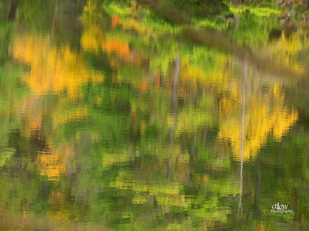 abstract Autumn foliage reflection