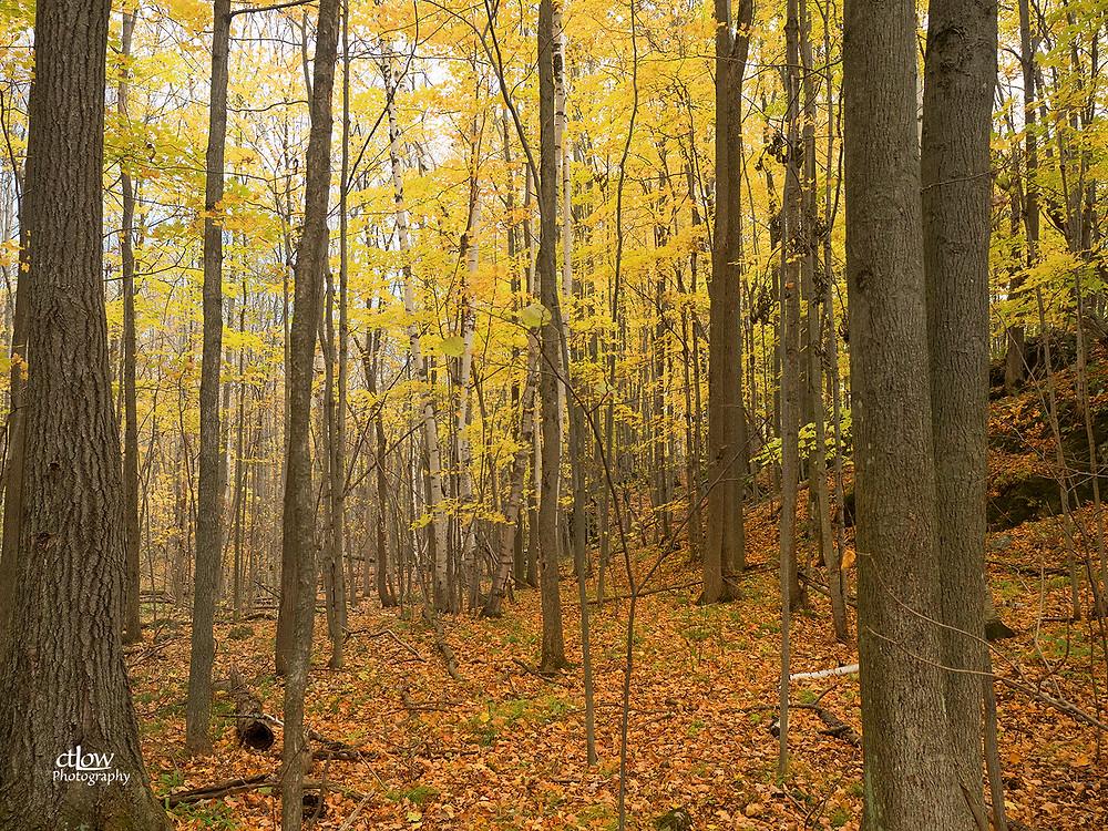 Woodland Wilderness