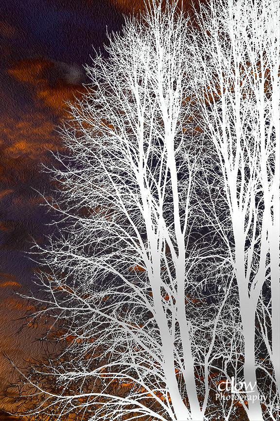 post sunset tree manipulated edited photo-editing