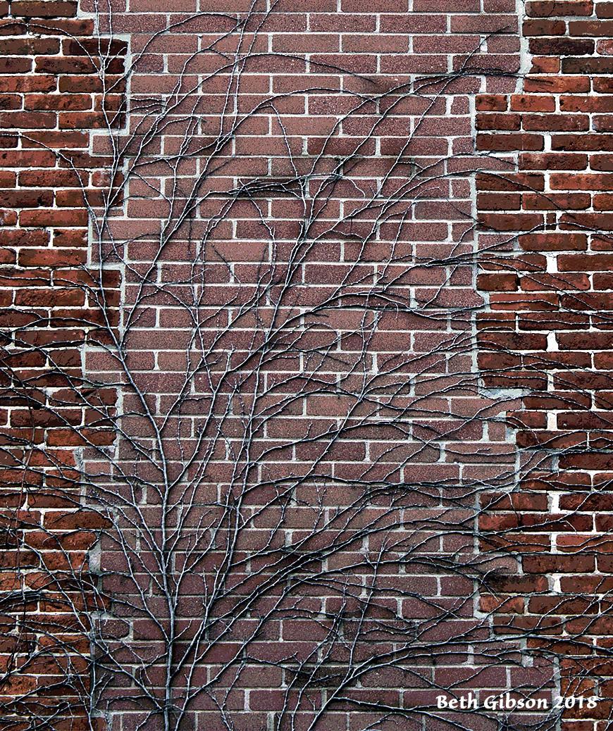 winter vines on brick will