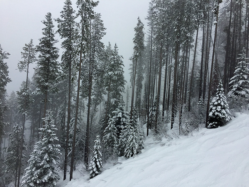 Fog Snow Woods Ski-slope
