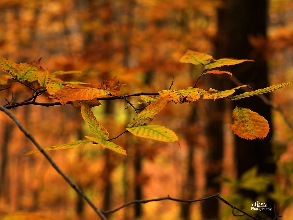 Autumn Leaves, neutral exposure