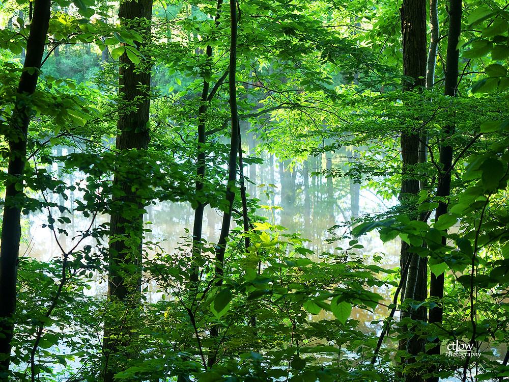 ghostly pond through iridescent foliage