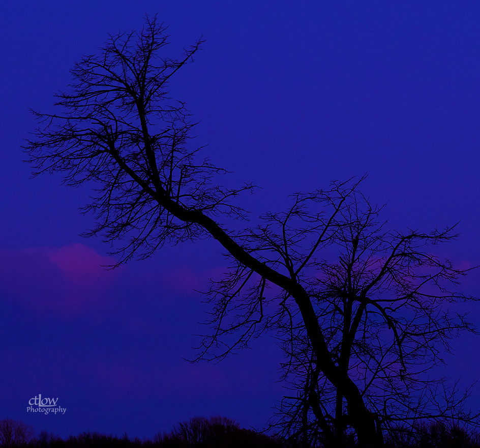 Winter tree bare branches dusk