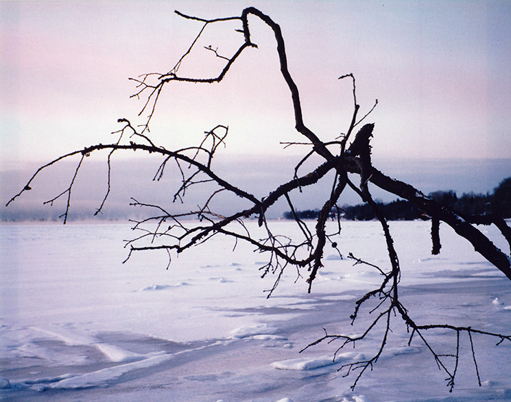 tree branches, Collins Bay, Kingston, Ontario, Canada