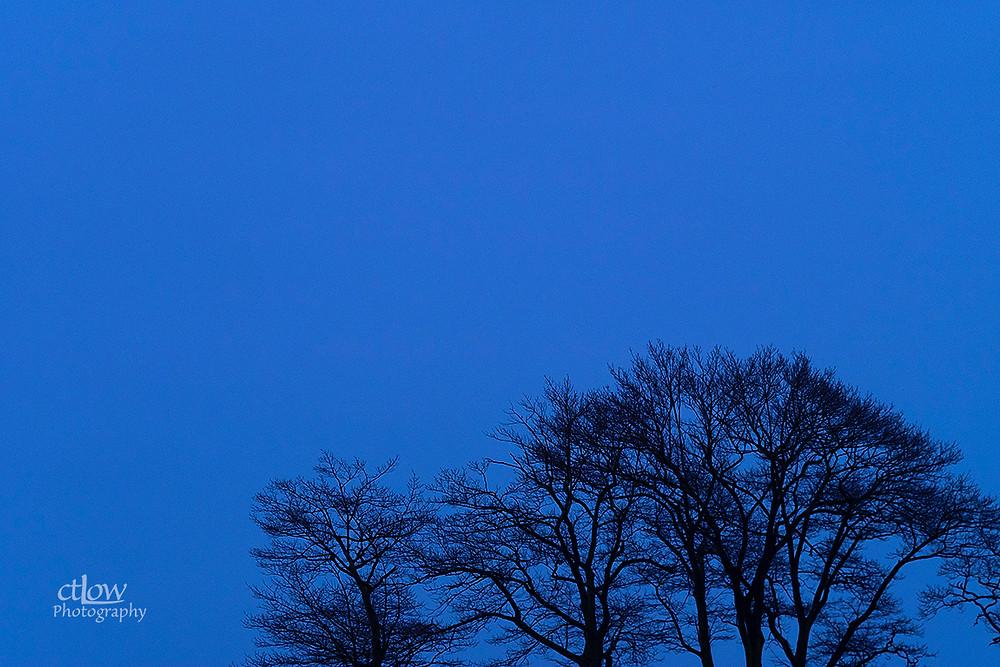 Bare winter tree branches, sky (dusk, rain)