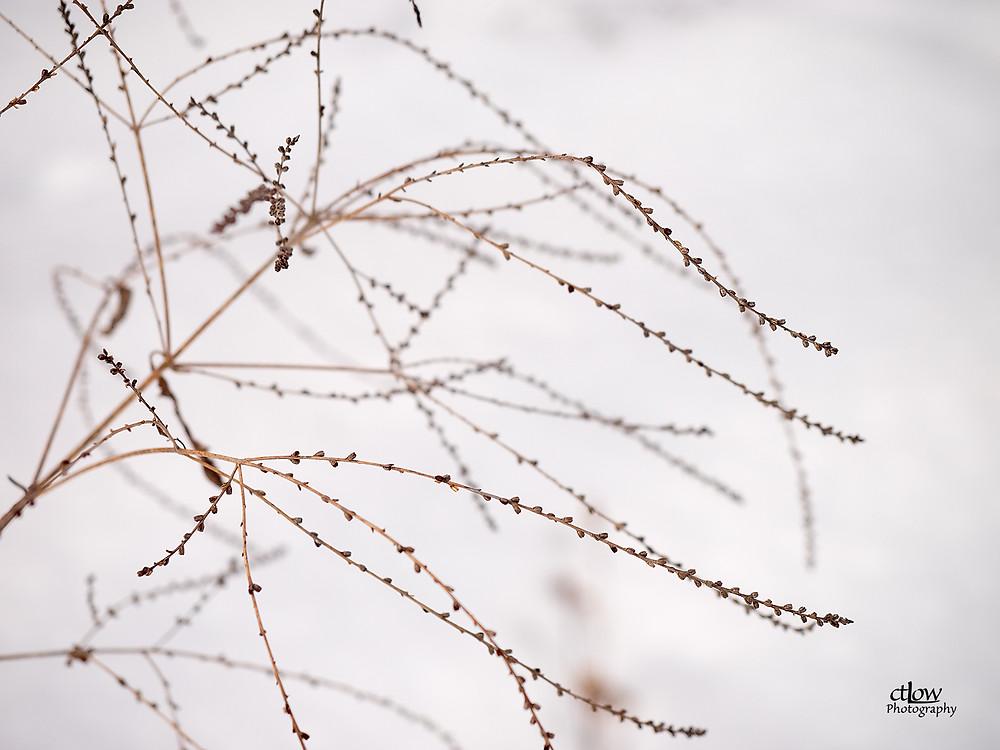 Winter tendrils