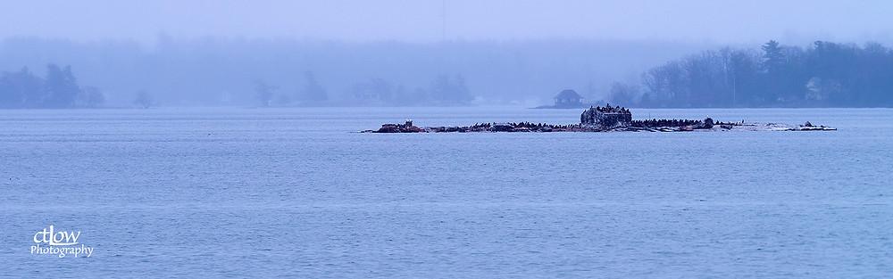 Thousand Islands rock structure cormorants dusk rain