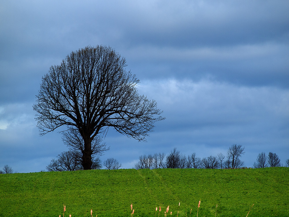 tree - in context: field, sky