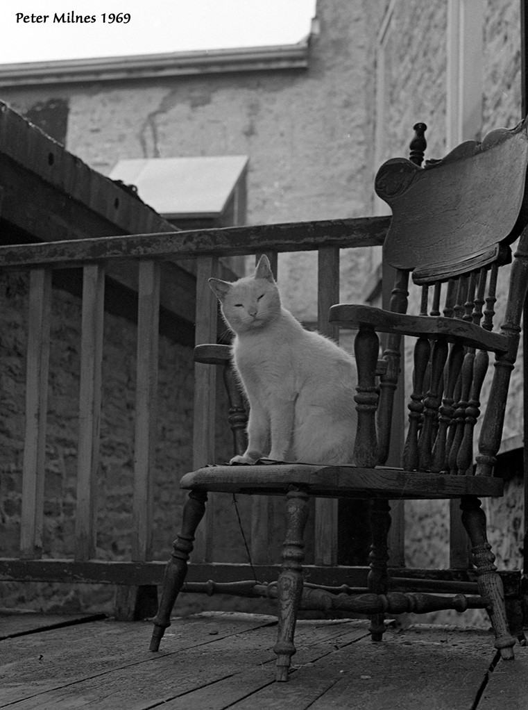 Cat on Chair, Peter Milnes, 1969