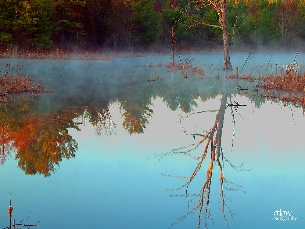misty swamp tree