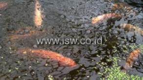 Bisnis Budidaya Ikan Berbasis Rumah Untuk Keuntungan Ekonomi