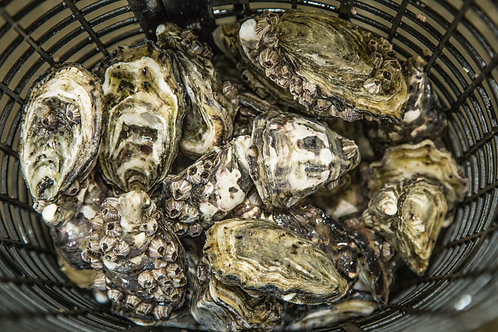 Orders for 17th, 18th & 19th September 5 DOZEN UNSHUCKED OYSTERS