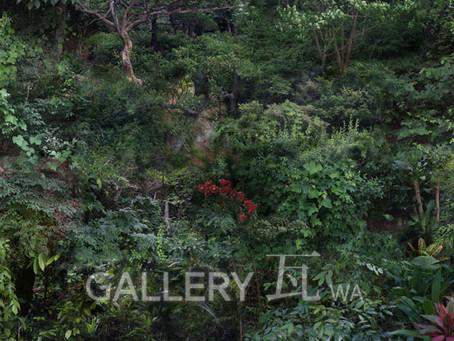 이혁준 사진전 <숲,Forest>