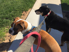 Bailey and Bo