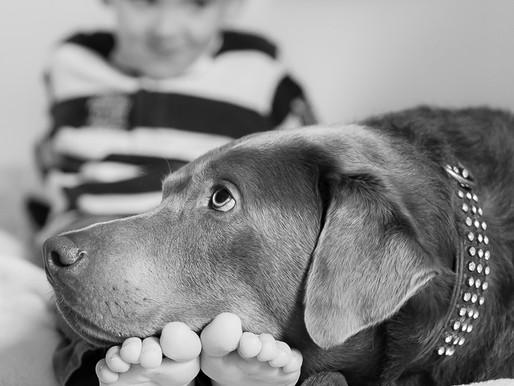 Familienfotoshooting mit Neugeborenem und Hund in Düsseldorf-Wittlaer