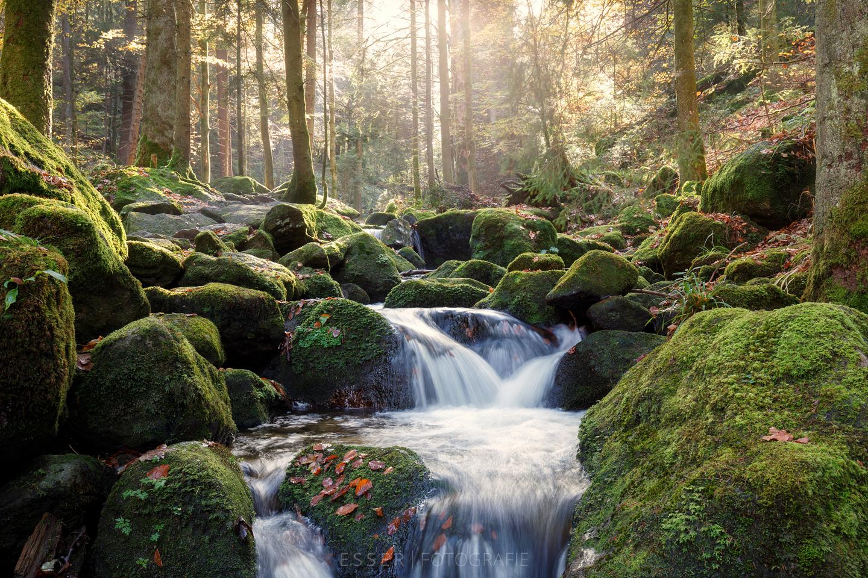 esser-fotografie-am-bach-im-schwarzwald