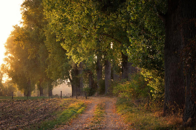 esser-fotografie-autumn-path